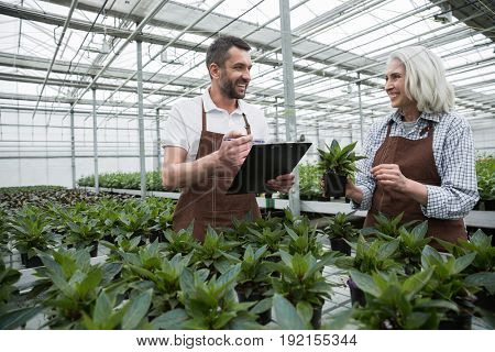 Image of young happy man standing in greenhouse near mature woman and plants holding clipboard. Looking aside.