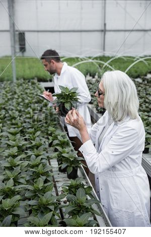 Image of concentrated young man and mature woman standing in greenhouse near plants holding clipboard. Looking aside.