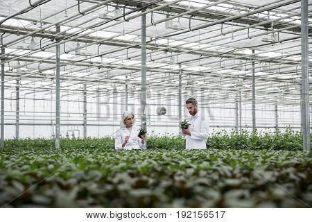 Image of young bearded man standing in greenhouse with mature woman holding plants. Looking aside.