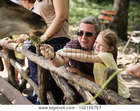 Caucasian dad and daughter feeding the giraffe at the zoo