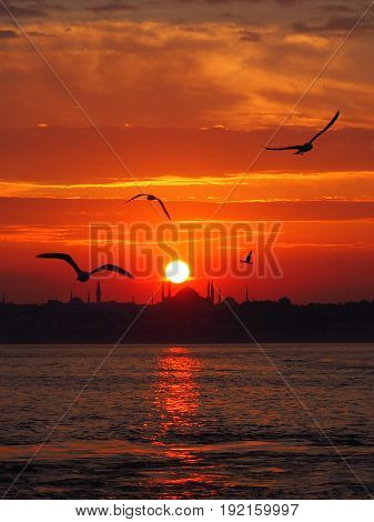steamboat in Istanbul with seagulls at golden sunset