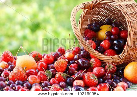 Strawberry, apricots, cherries, gooseberries poured out of the basket. Summer still life. Many fruits and berries