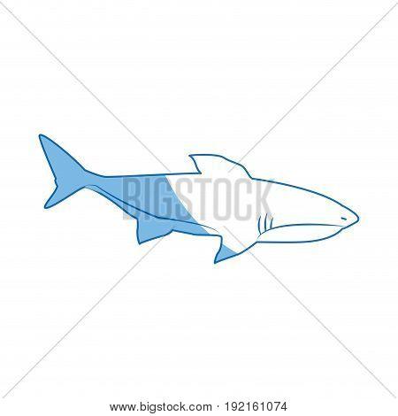 shark marine wild life nature animal vector illustration