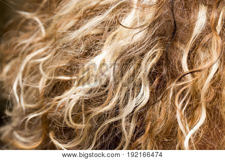 Human hair as a background. A photo