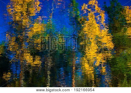 The reflection of birches pines and blue sky. The north of Russia
