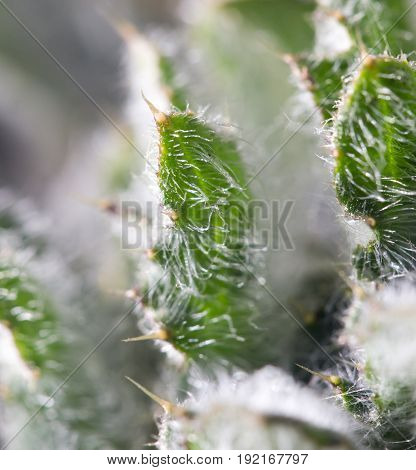 green prickly plant in nature . A photo