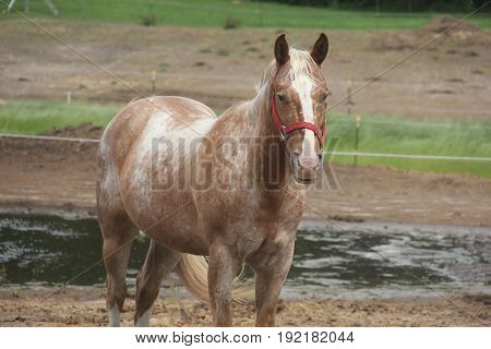 A horse stands in enclosure in Northern Michigan