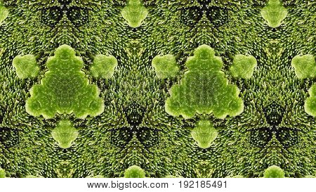 Green Abstract Macro Pattern