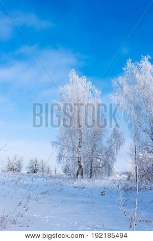 Beautiful winter landscape with trees in the frost