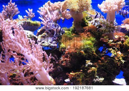 Sea Aquarium Background
