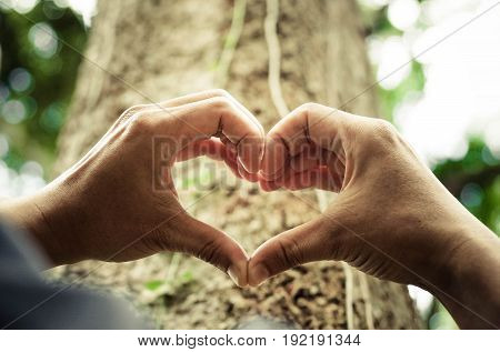 hands forming a heart shape around a big tree - protecting and love nature
