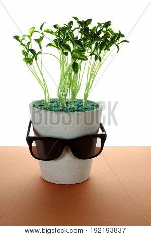 Pot Plant with Sunglasses on Wooden Background