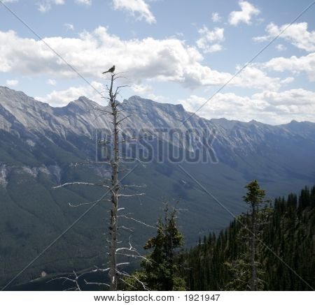 View From Sulfeu Mountain, Banff