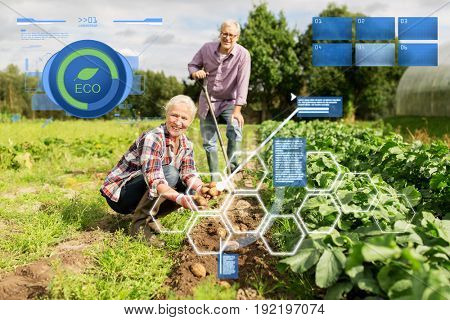 organic farming, agriculture and people concept - senior couple planting potatoes at garden or farm