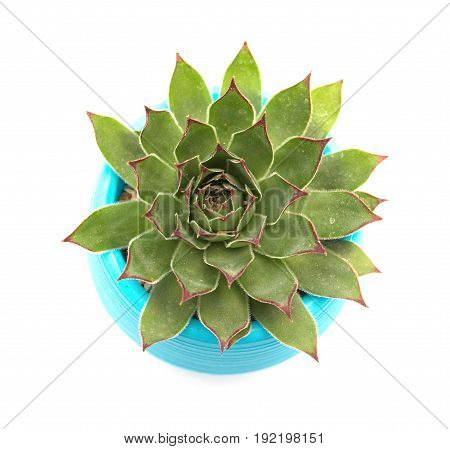 top view pot of green succulent plant on a white background