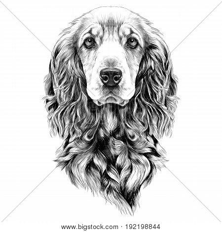 dog breed Cocker Spaniel muzzle sketch vector graphics black and white drawing