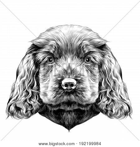 dog breed Cocker Spaniel puppy sketch vector graphics black and white drawing