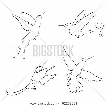 flying hummingbird line art set on white. stylized drawing by hand of colibri. elegant symbol vector illustration