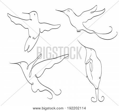 hummingbird symbol line art set on white. stylized drawing by hand of colibri. vector illustration