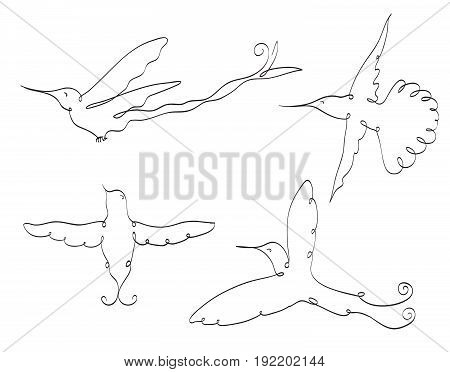 colibri symbol line art set on white. flying birds. stylized drawing by hand hummingbirds. vector illustration