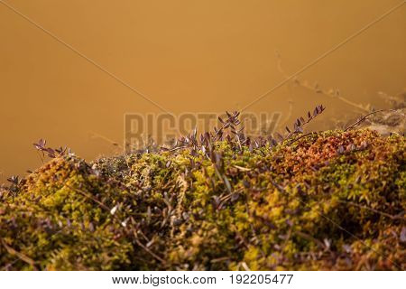 A Beautiful Ground Foliage In A Marsh In Early Spring