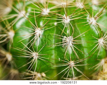 Home plant cactus close up. Toned image.
