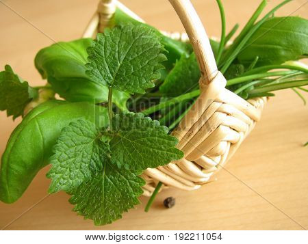 Basket with garden herbs, lemon balm, basil, chieves