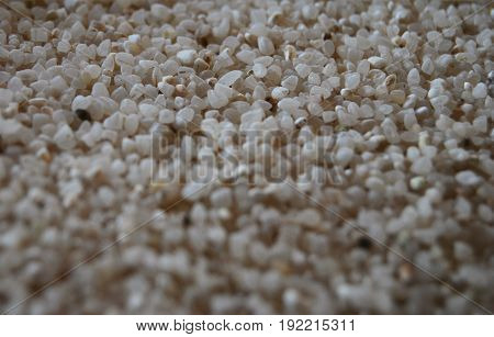 Rice grains in macro, with blackout, suitable for background