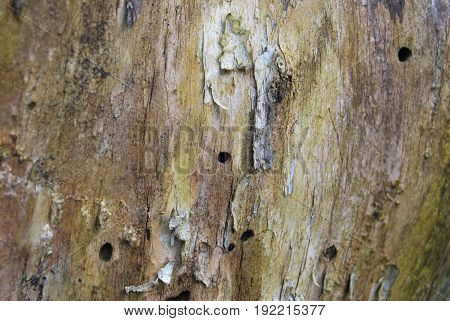 Structure of the old tree damaged by bark beetle
