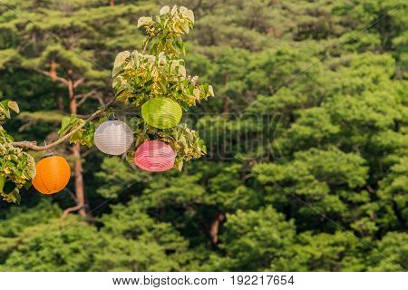 Closeup of colorful paper lanterns hanging from a tree branch.