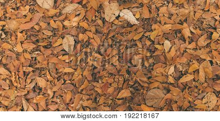 Dried leaf in the nature texture background
