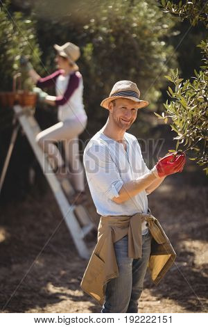 Portrait of young man plucking olives with woman in background at farm