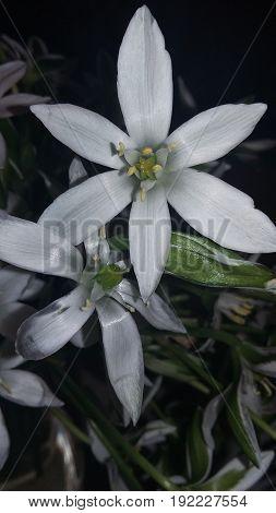 White flower. Spring , fiori bianchi di primavera