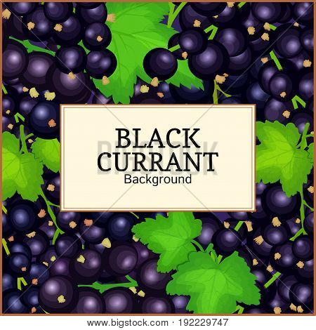 Square label on ripe black currant background. Vector card illustration. Black berry branch fresh and juicy currant for packaging design food, juice, jam, ice cream, smoothies, detox, cosmetics cream, tea