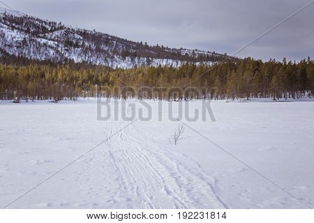 A Beautiful White Landscape Of A Snowy Norwegian Winter Day With Tracks For Snowmobile Or Dog Sled