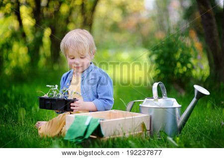Cute Little Boy Holding Seedling In Plastic Pots On The Domestic Garden At Summer Day