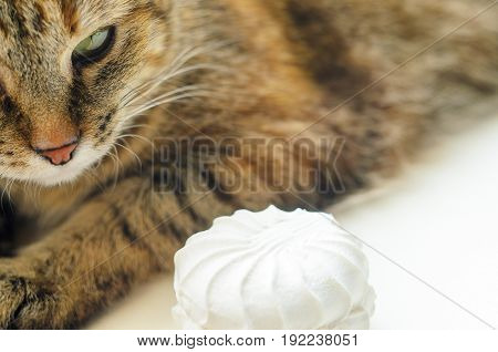 Cat with white marshmallow on white background.