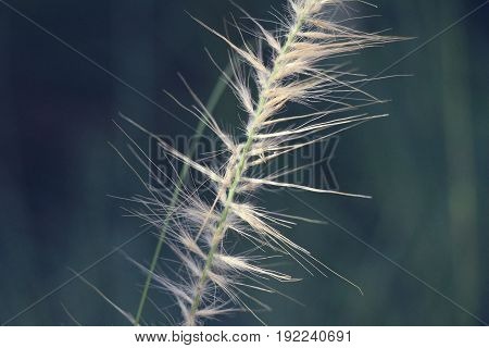 grass flowers in the nature in garden