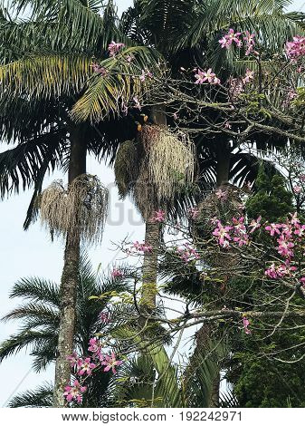 palm trees paradise flowers nature tropical jungle