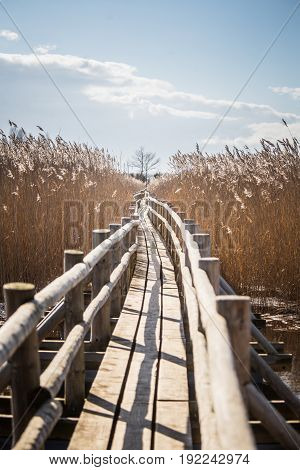 A Beautiful Wooden Footpath Through Reeds On A Lake In Early Spring