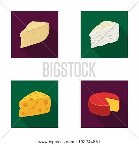 Parmesan, roquefort, maasdam, gauda.Different types of cheese set collection icons in flat style vector symbol stock illustration .