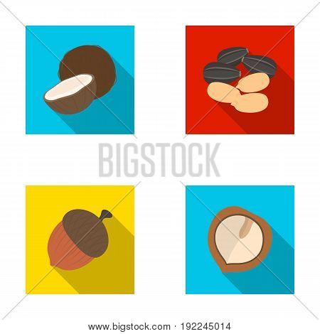 Coconut, acorn, sunflower seeds, manchueian walnut.Different kinds of nuts set collection icons in flat style vector symbol stock illustration .