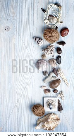 Frame of Various Shells Dry Plants Stones and Chalk closeup on Light Blue Wooden background. Top View