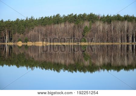 The forest and its reflection in the river in the spring day