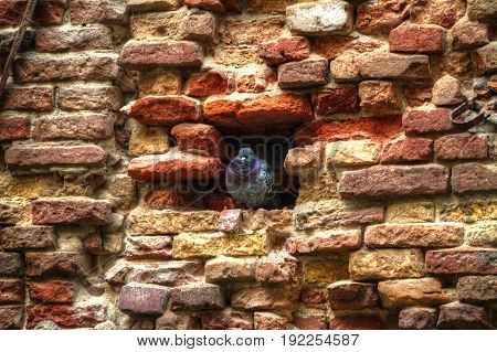 High Dynamic Range image of a bird in an eroded brick wall.