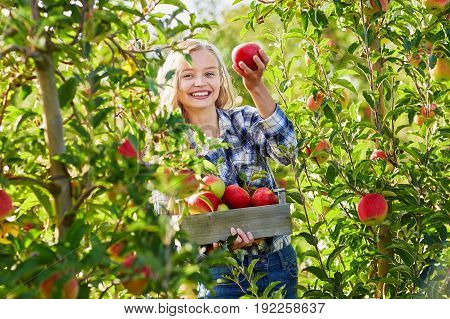 Woman Holding Crate With Ripe Red Apples On Farm