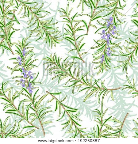 Rosemary or Rosmarinus officinalis. Leaves and flowers. seamless pattern. Vector illustration. For textile, decoration, packing wrapping