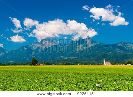 Alpine meadow with flowers. Mountains covered with forest and old lonely Church in the green field. Landscape in sunny summer day. Slovenia.