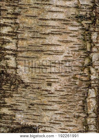 the texture of tree bark on a trunk