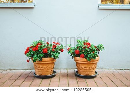 Two flowerpots with red flowers decorate the front of the house